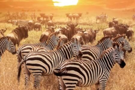 Serengeti Nemzeti Park – az afrikai parkok koronázatlan királya