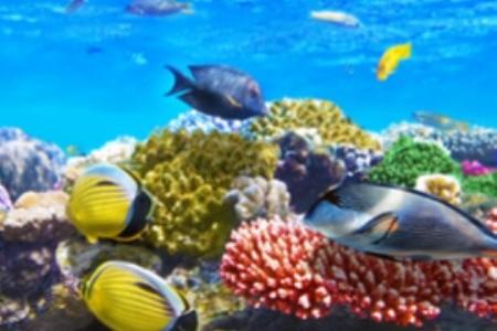 Fedezd fel a Vörös-tengert