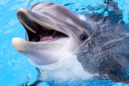 A bulgáriai Várna delfináriuma