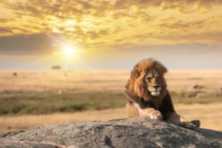 Az oroszlánkirály nyomában: melyik helyszínek inspirálták a kedvenc mesénket?