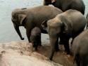 sloni...