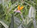 rostlinstvo