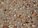 pláž v Mahdii plná krásných mušlí