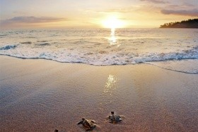 Sheraton Senggigi Beach Resort (Senggigi Beach)