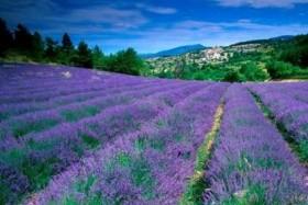 Az Alpok és Provence legjava