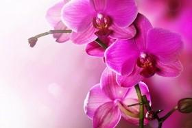 Orchideák Kavalkádja Klosterneuburgban