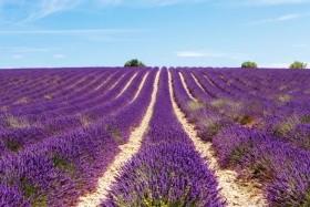 A Francia Riviéra Legszebb Városai És Provence - Csoportos Utazás Tengerparti Nyaralással
