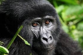 Uganda Szafari - Csoportos Körutazás
