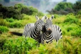 Sentrim Amboseli Camp, Sarova Salt Lick Game Lodge, Hotel Diani Sea Resort****