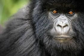 Uganda - Ruanda
