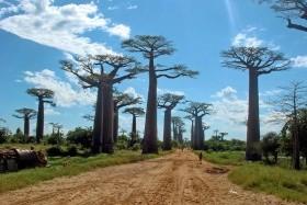 Madagaszkár haladóknak, a Baobab sugárúttal és a Tsingivel