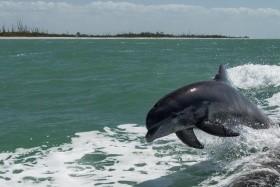 Floridai Vakáció - Egyéni Körutazás Bérautóval, Szállással