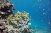 A moló végén található korall