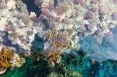 A hotel előtti korallzátony (részlet:)
