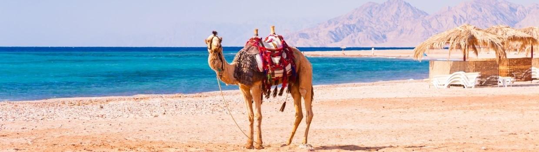 Utazzon velünk télből a nyárba, Egyiptomba!