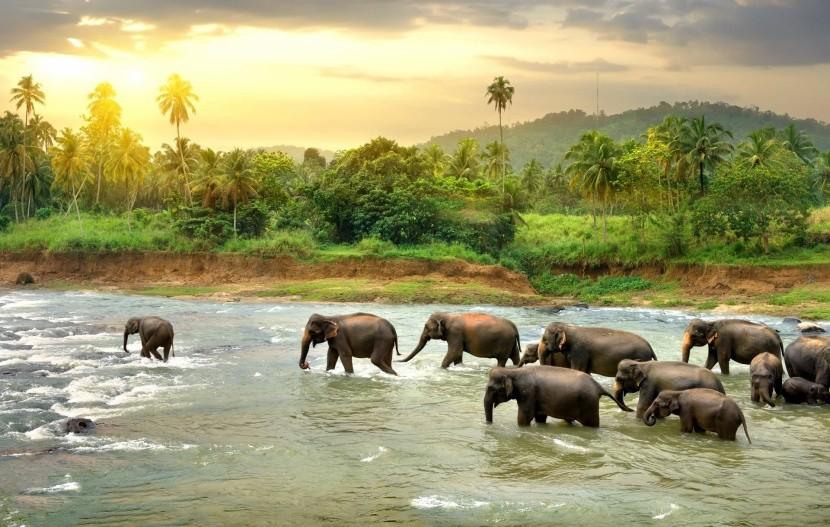 Elefántok víz pálmafák Sri Lanka