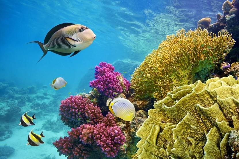 korallok Egyiptom Vörös tenger halak