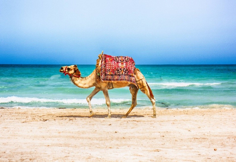Tunézia Afrika tengerpart teve hullám