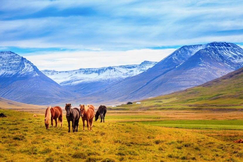 izlandi pónik hegyek Izland puszta kanyon