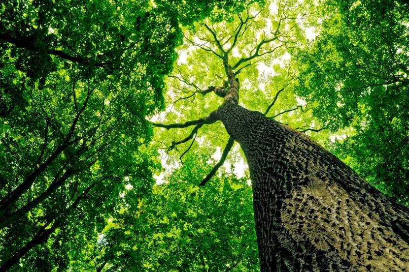 különleges fa