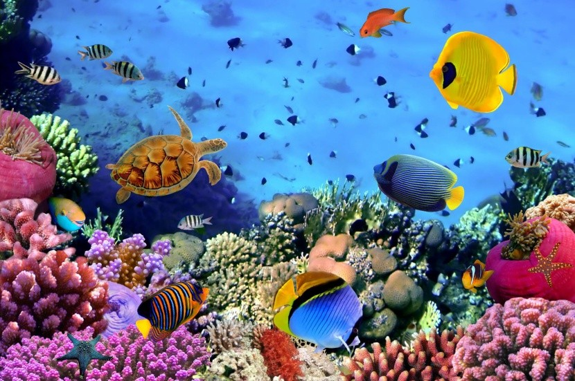 tenger búvárkodás sznorkel korall Egyiptom