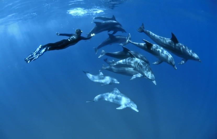 """Ras Samadai, a """"delfin zátony"""""""