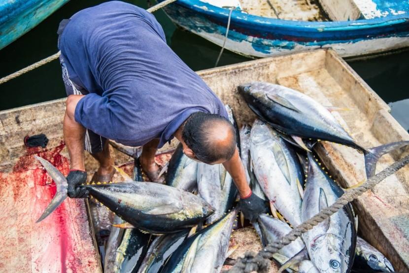 Friss halak a maléi piacon