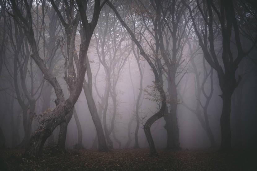 Hoia Baciu erdő, Románia
