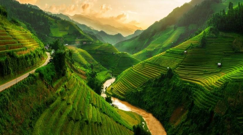 Vietami rizsföldek
