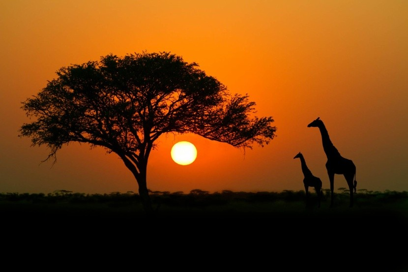Kenya kalandos vadvilága