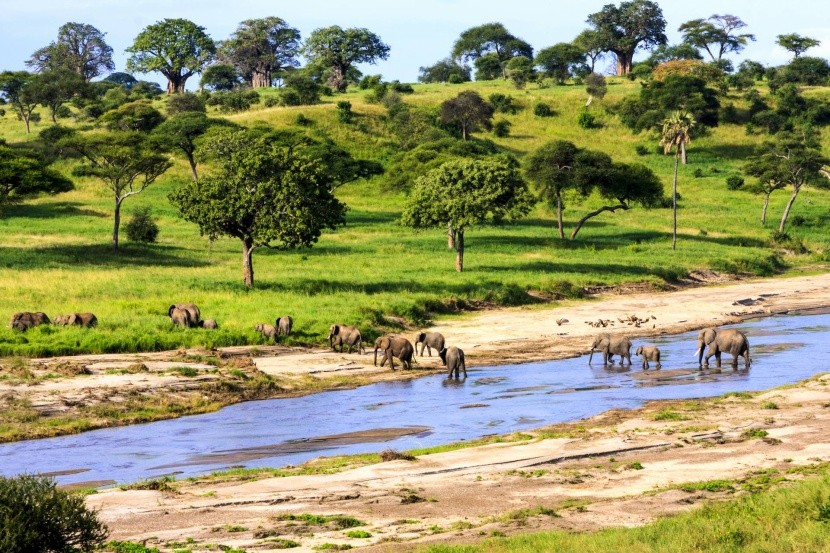Elefántok a Serengetiben