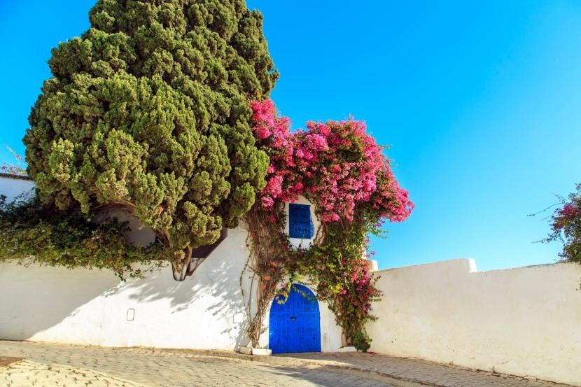 Tunéziai építészet