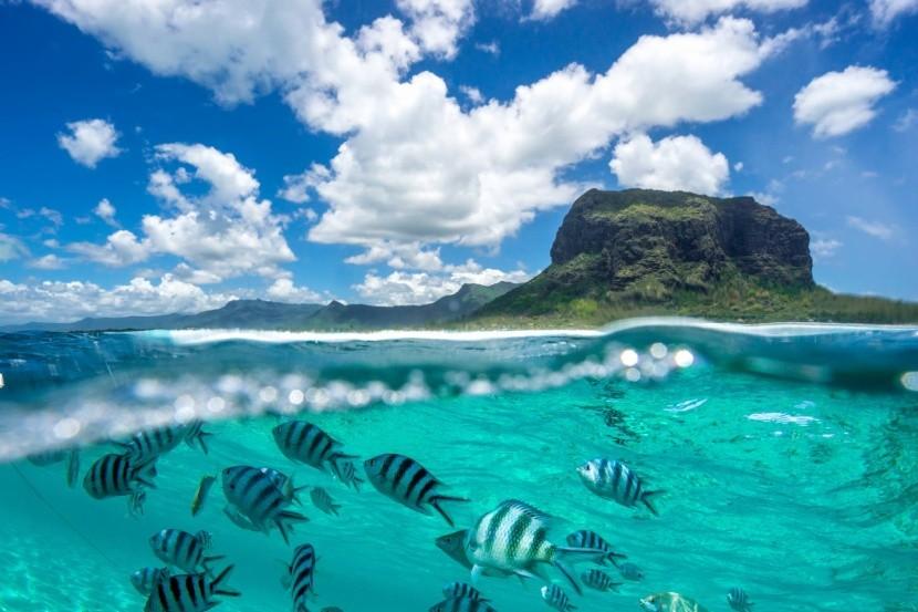 Tenger alatti élet Mauritius partjai körül