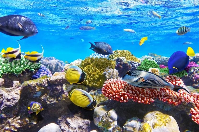Vörös-tenger