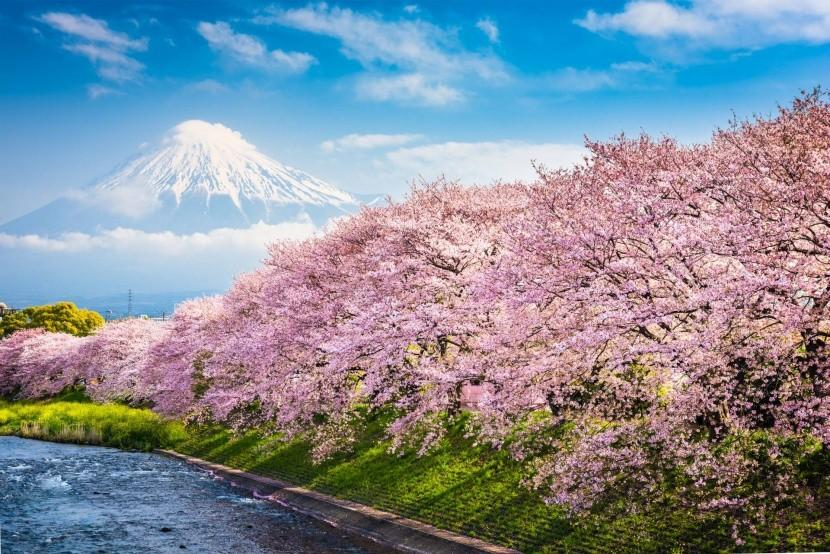 Amikor Japánban virágoznak a fák
