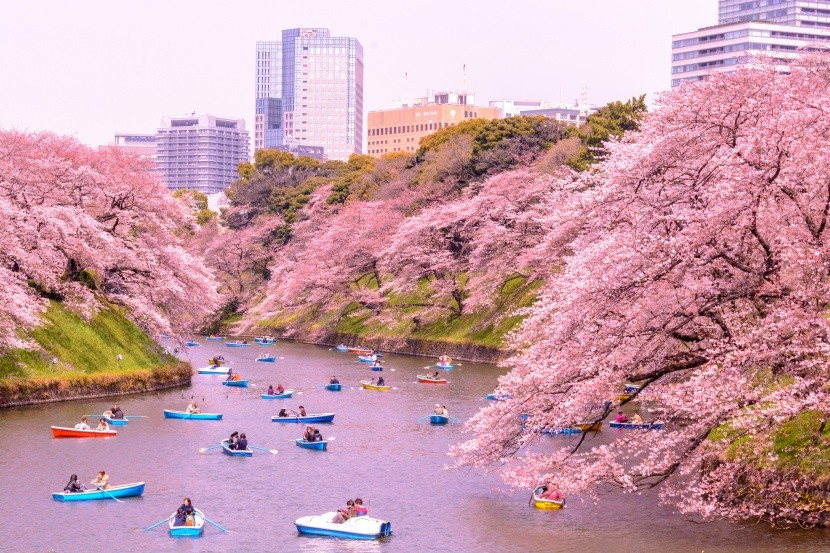 Hanami a Kitanomaru parkban