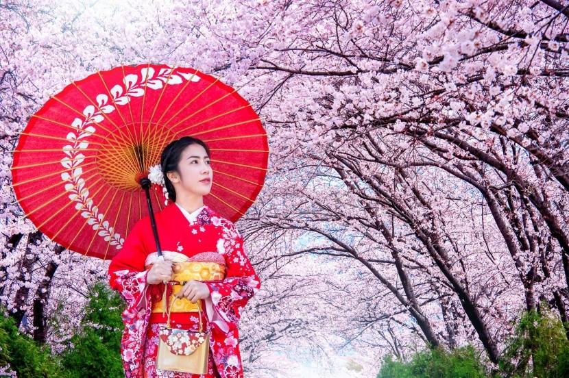 A japánok imádják a fák látványát