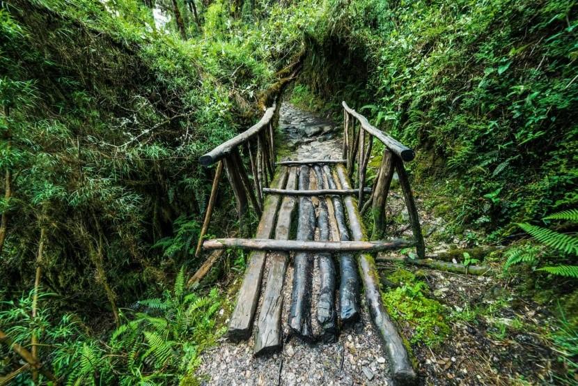 Út a perui őserdőben