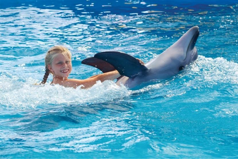 Úszás delfinekkel