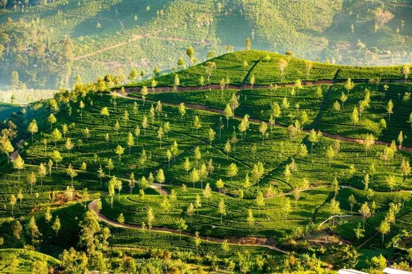 Teaültetvények Sri Lanka szigetén