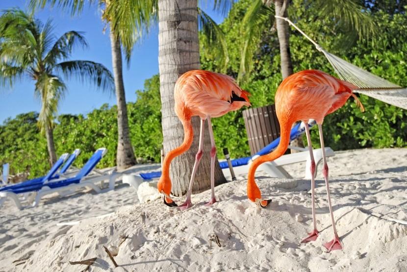 Flamingo strand, Aruba