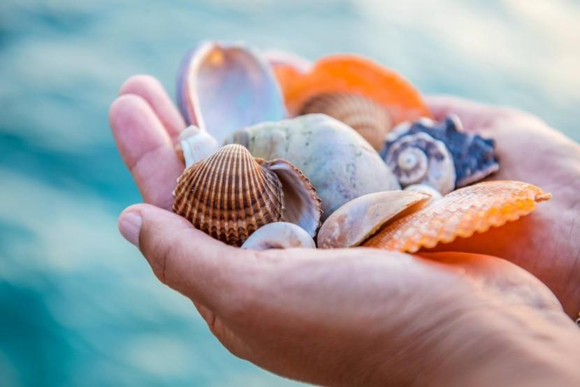 A legszebb tengerpartok a kagylók szerelmesei