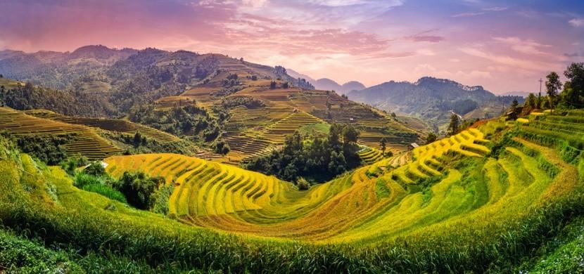 Vietnámi rizsföldek