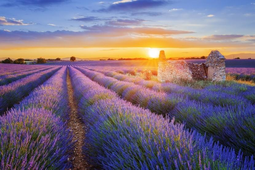 A levendulás Provence