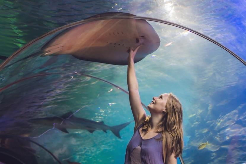 Víz alatti alagút a Dubaji akváriumban