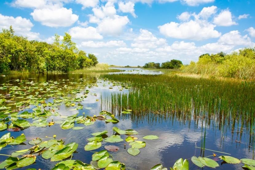 Everglades Nemzeti Park, Florida
