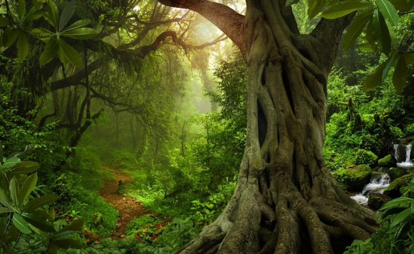 Nem biztos, hogy unokáink látják az őserdőt