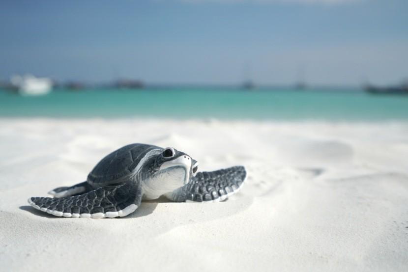 Óvjátok a tengeri teknősbékákat!
