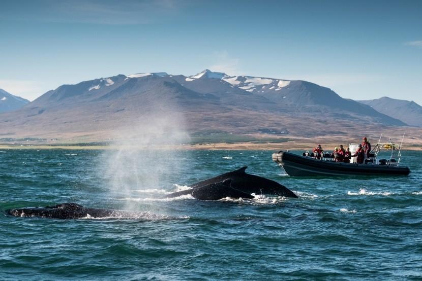 Bálnales Izlandon